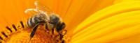 key4c_Bees