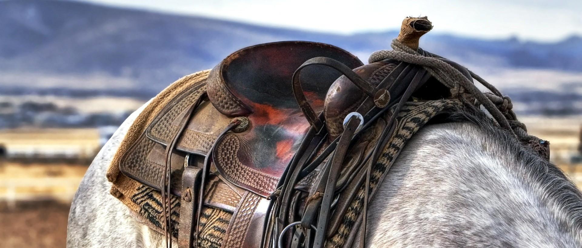 Pferd mit Westernsattel